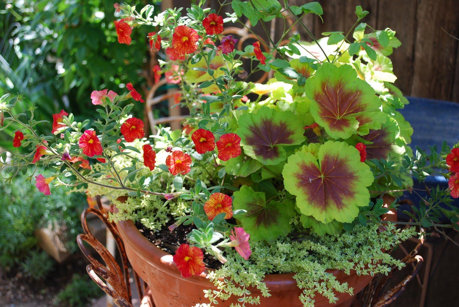 fresh-containers-garden-container-garden