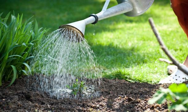 4581-gardenwaterlead